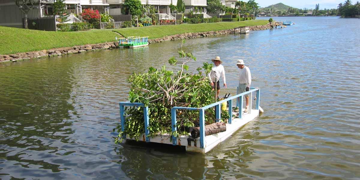 removing mangroves